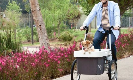 Taga2-cargobike-trasporto bambini-trasporto animali-02