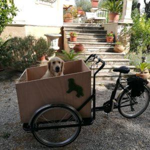 Cargo Bike per Animali