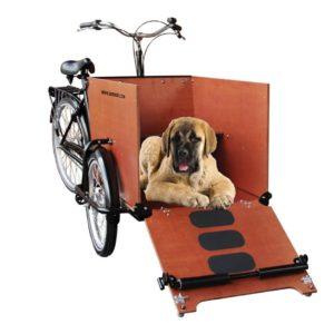 babboe-dog (2)